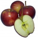 Apple stimulate the secretion of digestive juices and aid protein digestion