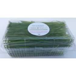 fresh-wheatgrass-cut-dublin-wexford-Ireland-home-delivery-juice