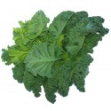 One of nature's wonder foods, kale is loaded with vitamins especially A and C.