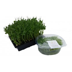 pea-shoots-cut-bowl-microgreens-home-delivery