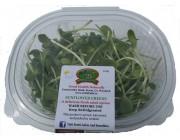 Sunflower Greens Bowl 100g