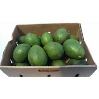 Avocado (Proper) Box 7-7.5 kg
