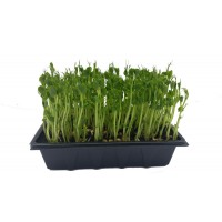 Pea Shoots Tray