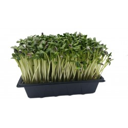 sunflower-greens-tray-fresh-home-delivery-ireland-wexford-dublin