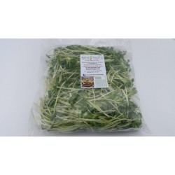 Sunflower-Greens-micro-leaf